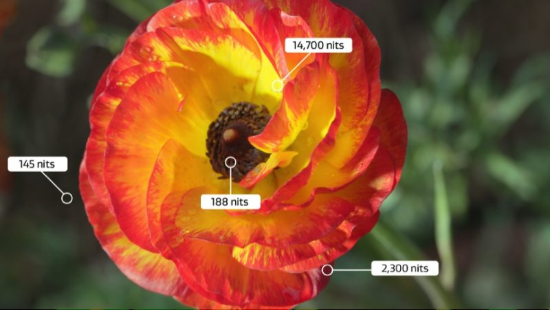 Dolby Vision Flower