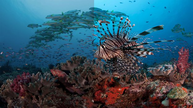 Blue Planet II in UHD & HDR on BBC iPlayer