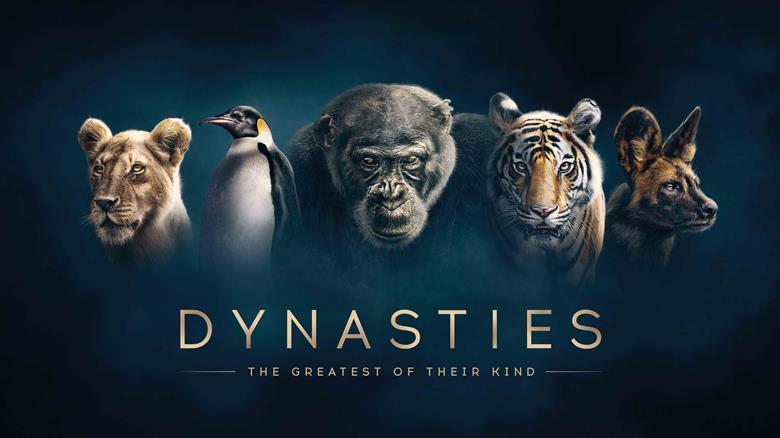 BBC to show Dynasties in Ultra HD